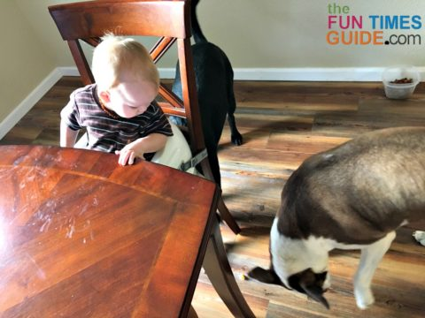Our dogs help us clean up the food that baby drops on the floor during baby led weaning.