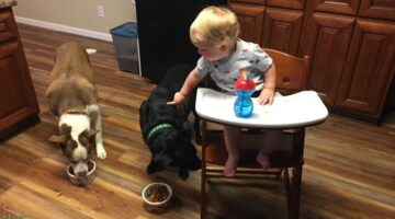 Safely feeding the dogs while baby sits comfortably in his Keekaroo Right Height high chair
